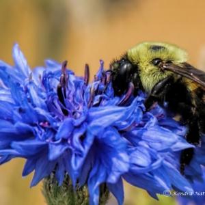 """Kendra Natter """"Bee"""""""