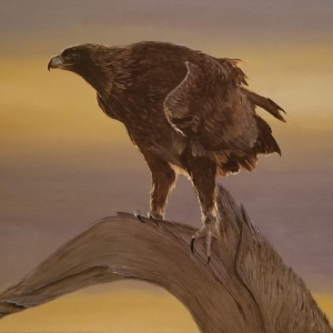 Hinchliff Smith, Esther_Juvenile Bald Eagle White Headress 2nd Year_Oil - Copy - Copy