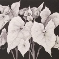 Thomas, Shaaron_Crystal Caladium_Quilted Silk Painting_$300